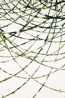 Moss Vine by Candice Alford