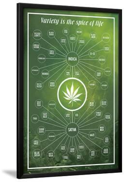 Cannabis- Variety Is The Spice Of Life