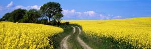 Canola, Farm, Yellow Flowers, Germany