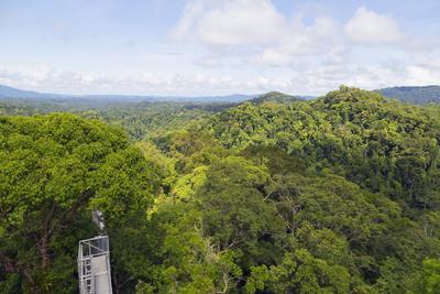 https://imgc.allpostersimages.com/img/posters/canopy-walk-ula-temburong-national-park-brunei-borneo-southeast-asia_u-L-PQ8NHZ0.jpg?p=0