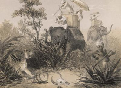 British in India Shooting a Tiger from Elephants