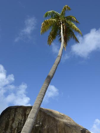 https://imgc.allpostersimages.com/img/posters/caribbean-british-virgin-islands-palm-tree-in-spring-bay-the-baths_u-L-PQFAYF0.jpg?p=0
