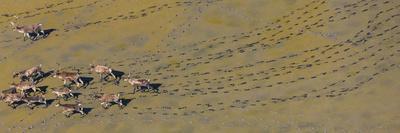 https://imgc.allpostersimages.com/img/posters/caribou-leaving-tracks-in-mud-alaska-usa_u-L-Q1CZRK60.jpg?p=0