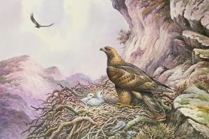 Golden Eagles at their Eyrie by Carl Donner