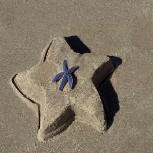 Starfish II by Carl Ellie