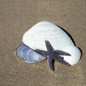 Startfish I by Carl Ellie