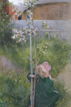 Apple Blossom (Appelblom), 1894 by Carl Larsson