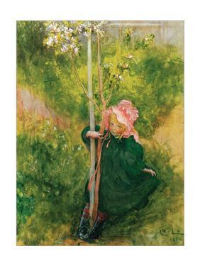 Apple Blossom by Carl Larsson