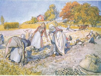 The Children Filled the Buckets and Baskets with Potatoes by Carl Larsson