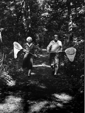 Author Vladimir Nabokov and His Wife Vera Chasing Butterflies by Carl Mydans