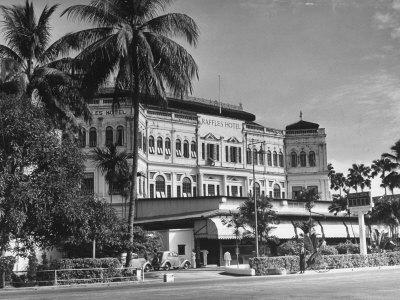 Palm Trees Surrounding the Raffles Hotel