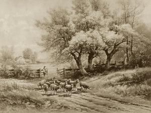 Herding Sheep by Carl Weber