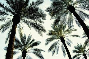 Palm One by Carla West