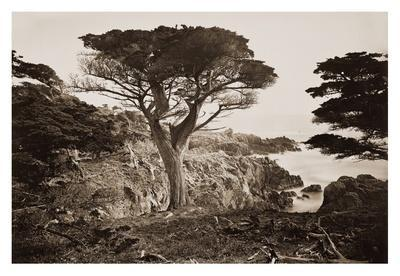 Cypress Point, Monterey, California, about 1880s