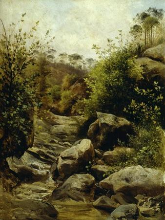 View of Scopeti Through Rocks