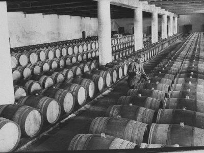 Cellar of Maturing Wines as Wine Maker Tests with Pipette
