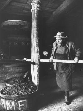 Man Using Old Wine Press at Vaux En Beauiplais Vineyard by Carlo Bavagnoli