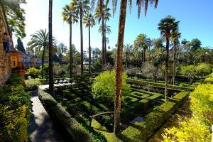 Dance Gardens, Real Alcazar, UNESCO World Heritage Site, Seville, Andalucia, Spain by Carlo Morucchio
