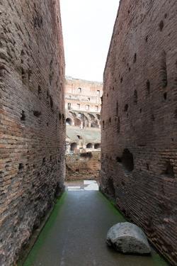 The Colosseum, UNESCO World Heritage Site, Rome, Lazio, Italy, Europe by Carlo