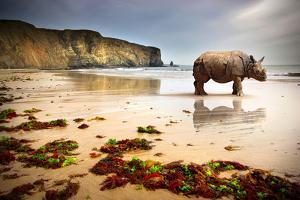 Surreal Scene of a Big Rhinoceros in an Empty Beach by Carlos Caetano