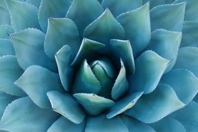 Agave Plant by Carly Hennigan