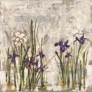 Iris Mist II by Carney