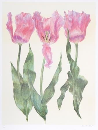 Iris Botanical by Carol Ann Bolt