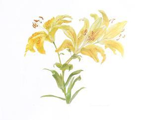 Tiger Lily by Carol Ann Bolt