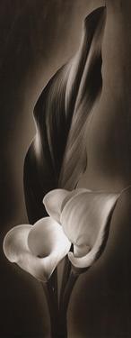 Unfolding I by Carol Elizabeth