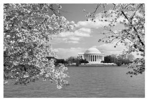 Jefferson Memorial with cherry blossoms, Washington, D.C. - Black and White Variant by Carol Highsmith