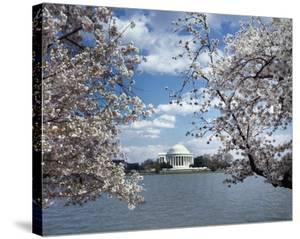 Jefferson Memorial with cherry blossoms, Washington, D.C. - Vintage Style Photo Tint Variant by Carol Highsmith