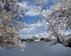 Jefferson Memorial with cherry blossoms, Washington, D.C. by Carol Highsmith