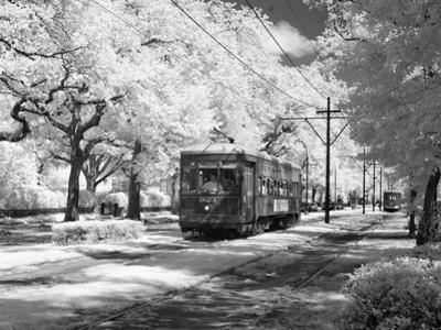 Streetcar, St. Charles Avenue, New Orleans by Carol Highsmith