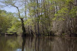 The Scenic Delta by Carol Highsmith