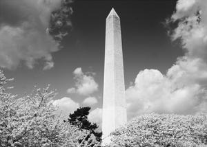 Washington Monument and cherry trees, Washington, D.C. - Black&W by Carol Highsmith