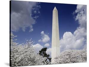 Washington Monument and cherry trees, Washington, D.C. by Carol Highsmith