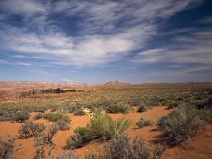 Wildflowers in the Harsh Arizona Desert by Carol Highsmith