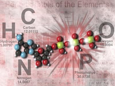 Adenosine Triphosphate Molecular Model Showing High Energy Bonds with a Periodic Table of Elements