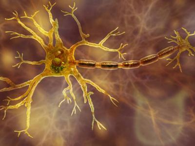 Biomedical Illustration of a Neuron, Showing the Dendrites, Cell Body, and Axon
