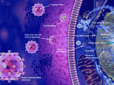 Illustration of Viral Reproduction the Virus Loses its Envelope and Capsid by Carol & Mike Werner