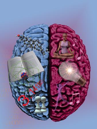 Illustration Showing the Attributes of Left and Right Brain Activity in Humans by Carol & Mike Werner