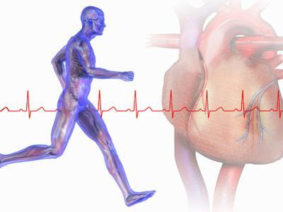 Runner, Male Likeness Showing Musculature and Skeleton Against an Ekg and Heart by Carol & Mike Werner