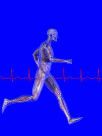 Runner, Male Likeness Showing Musculature and Skeleton Against an Ekg by Carol & Mike Werner