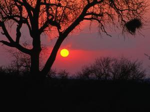 African Sunset, Kruger National Park, Kruger National Park, Mpumalanga, South Africa by Carol Polich