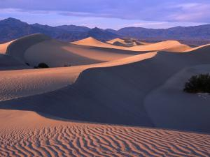 Sand Ripples at Mesquite Sand Dunes, Death Valley National Park, USA by Carol Polich