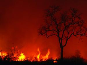 Veld Fire, Kruger National Park, Mpumalanga, South Africa by Carol Polich
