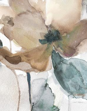 Watercolor Poppy I by Carol Robinson