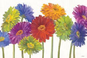Colorful Gerbera Daisies by Carol Rowan