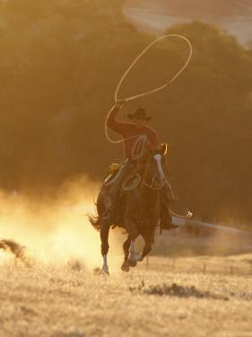 Cowboy Galloping While Swinging a Rope Lassoo at Sunset, Flitner Ranch, Shell, Wyoming, USA by Carol Walker