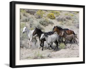 Group of Wild Horses, Cantering Across Sagebrush-Steppe, Adobe Town, Wyoming by Carol Walker
